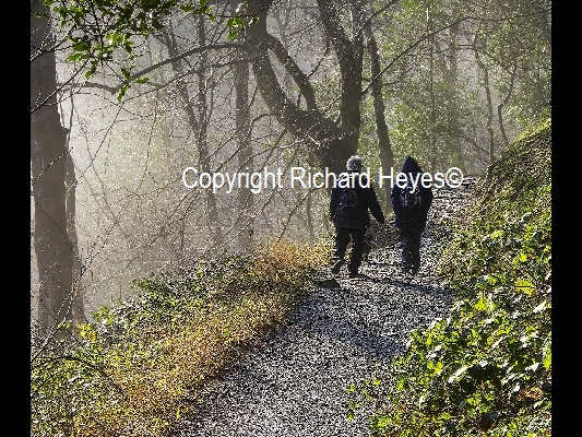 27_Misty morning in the Woods_Richard Heyes_(-)