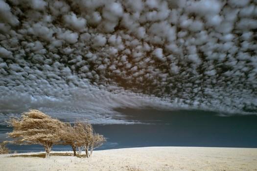 Fulking Hill Trees, by Ed Watts
