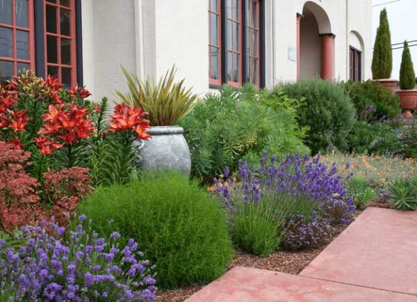 drought tolerant plant ideas