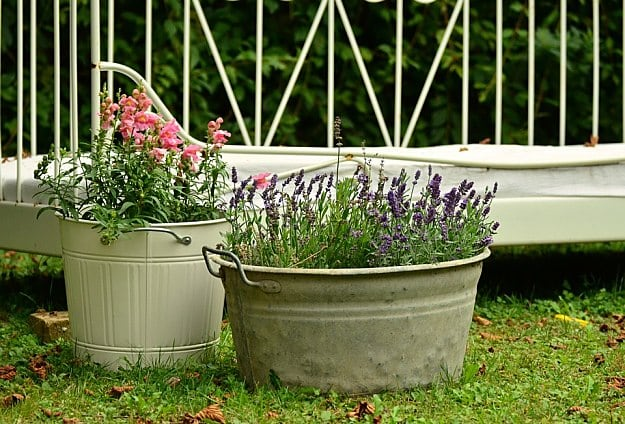 15 Practical Gardening Ideas On A Budget Smart Homesteading Tips