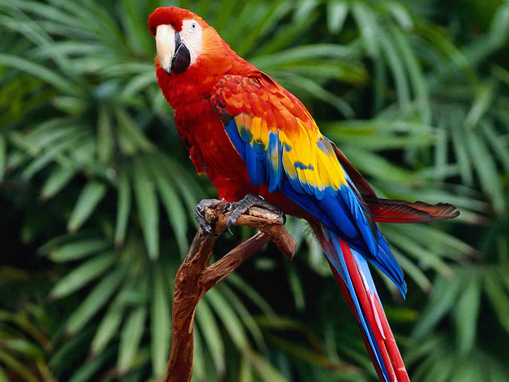 A half of australia's bird species, a third of its mammals and frogs, a quarter of its reptiles and over 12000 insects have been catalogued so far. Rainforest Birds Rainforest Animals