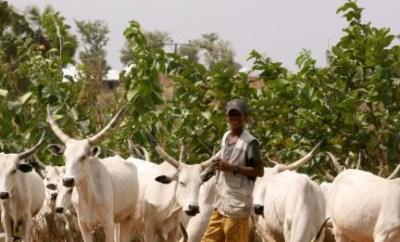 Borno State government?donates Sambisa Forest for RUGA
