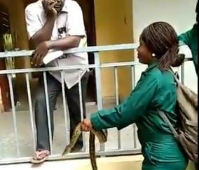 Students of forestry and wildlife shiver in terror as they are made to carry a snake as part of their continuous assessment