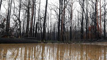 Large puddles form next to burnt bushland in the Blue Mountains, Australia, 17 January 2020.