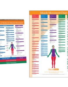 You  re viewing joint range of motion muscle movement chart also kent health systems rh kenthealth