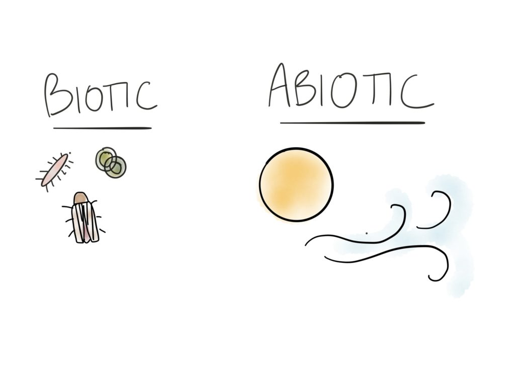 2: Abiotic and Biotic Factors Make Up an Ecosystem
