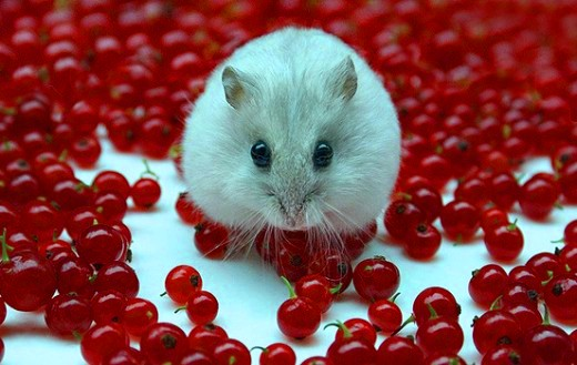 Best Cute Wallpapers 2012 Cute Stunning Animal Pictures Selection 4buzz