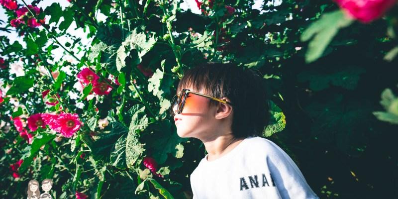 【台南花季】台南景點,學甲的花季開始囉~2020唸戀學甲蜀葵花文化節活動! 第一次帶小孩們看蜀葵花!