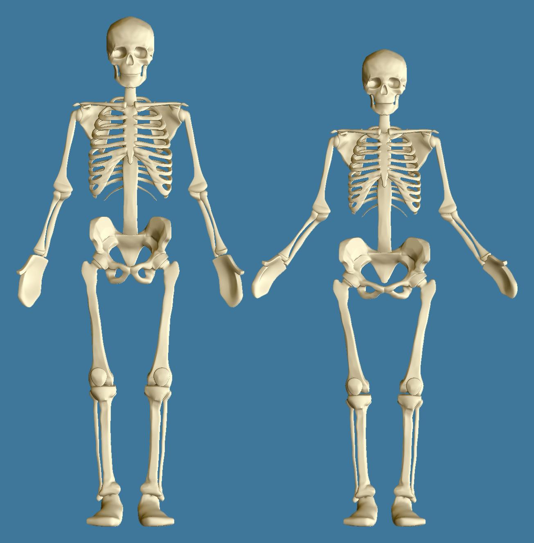 Bammes Skeleton Refined 4colorgrafix The Art And Designs Of Kofi