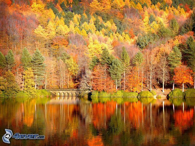 Bunter herbstlicher Wald