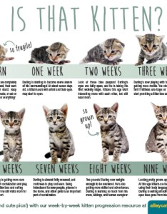 How old is that kitten progression at  glance also alley cat allies rh alleycat