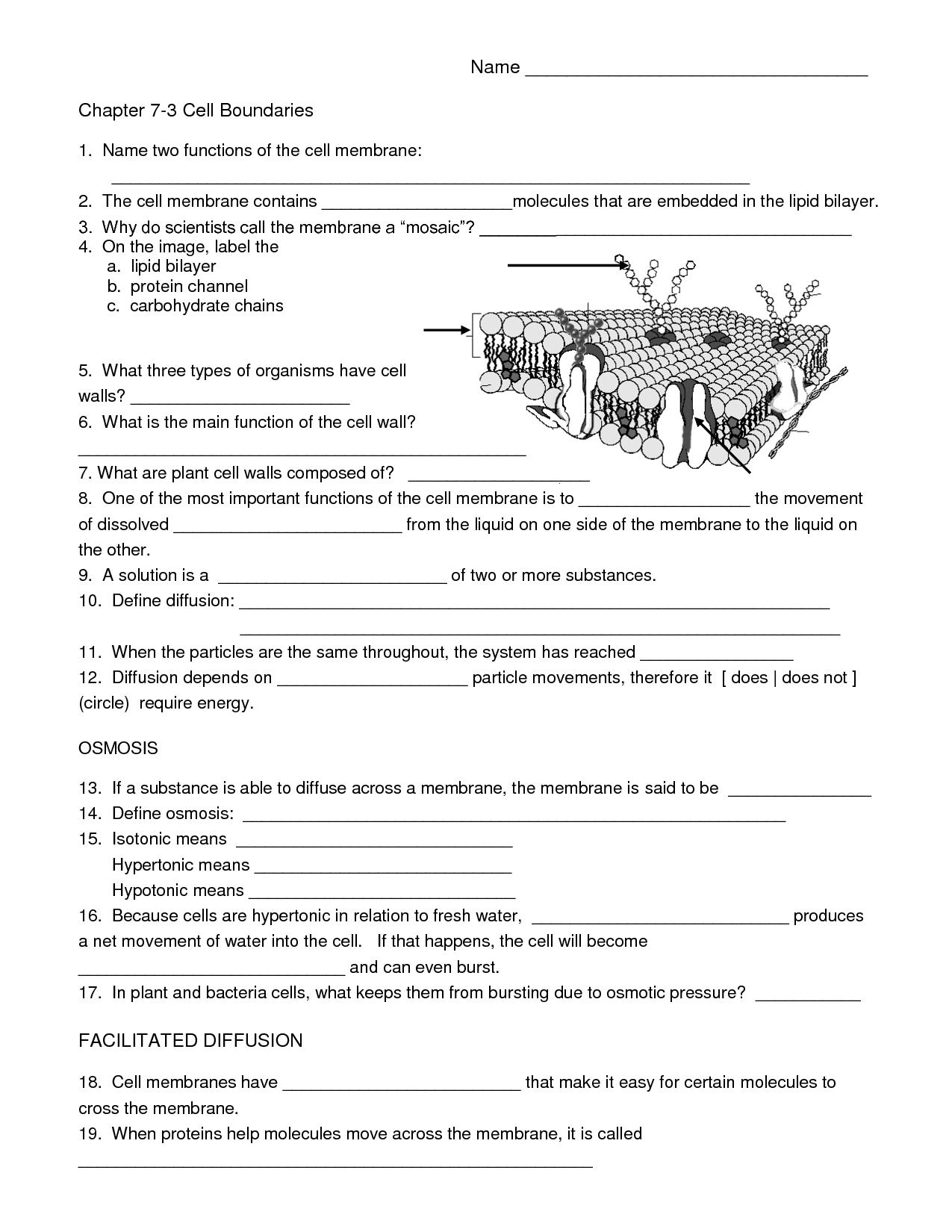 Biology Cell Worksheets