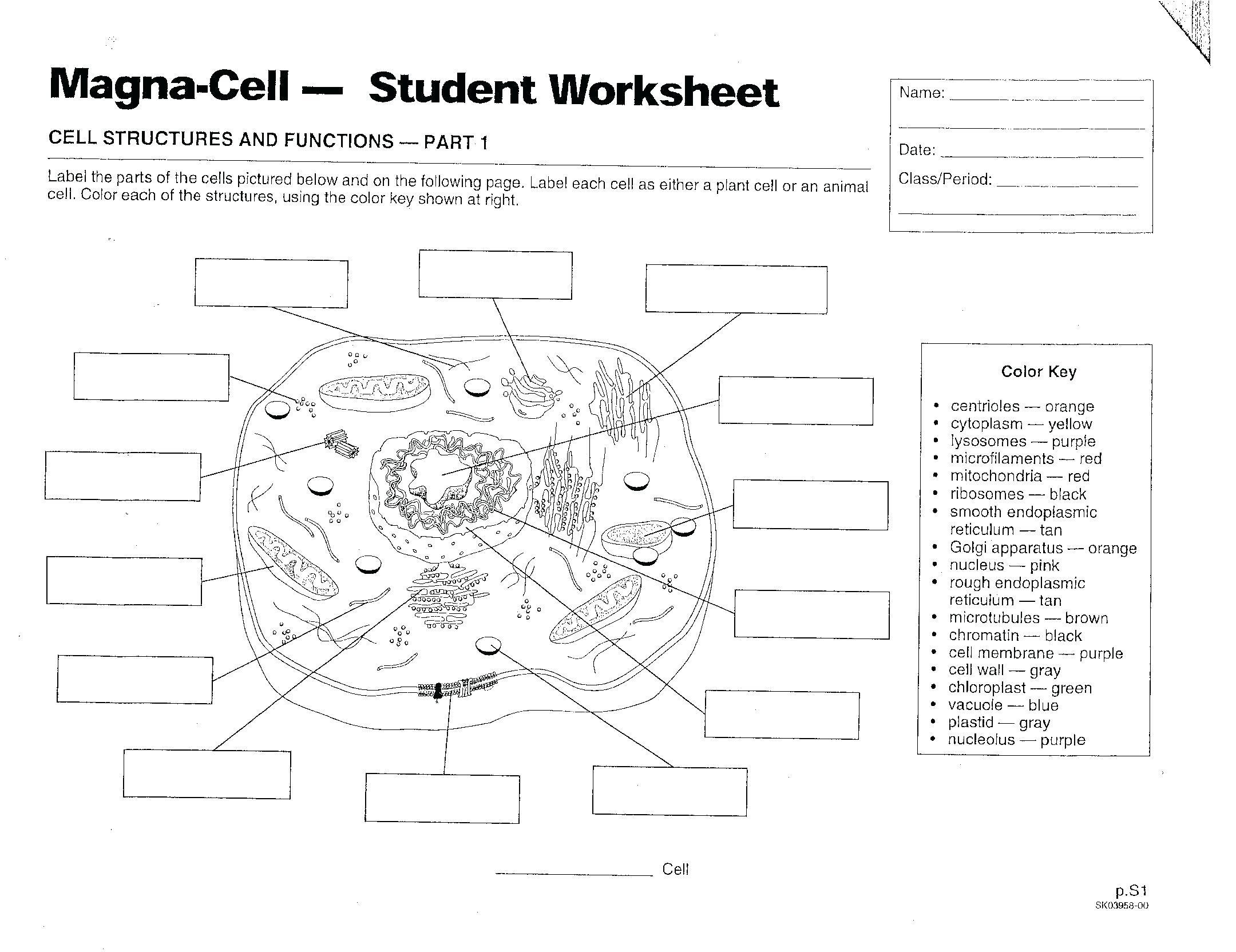 Worksheet Animal Cell Coloring Worksheet Answers Animal