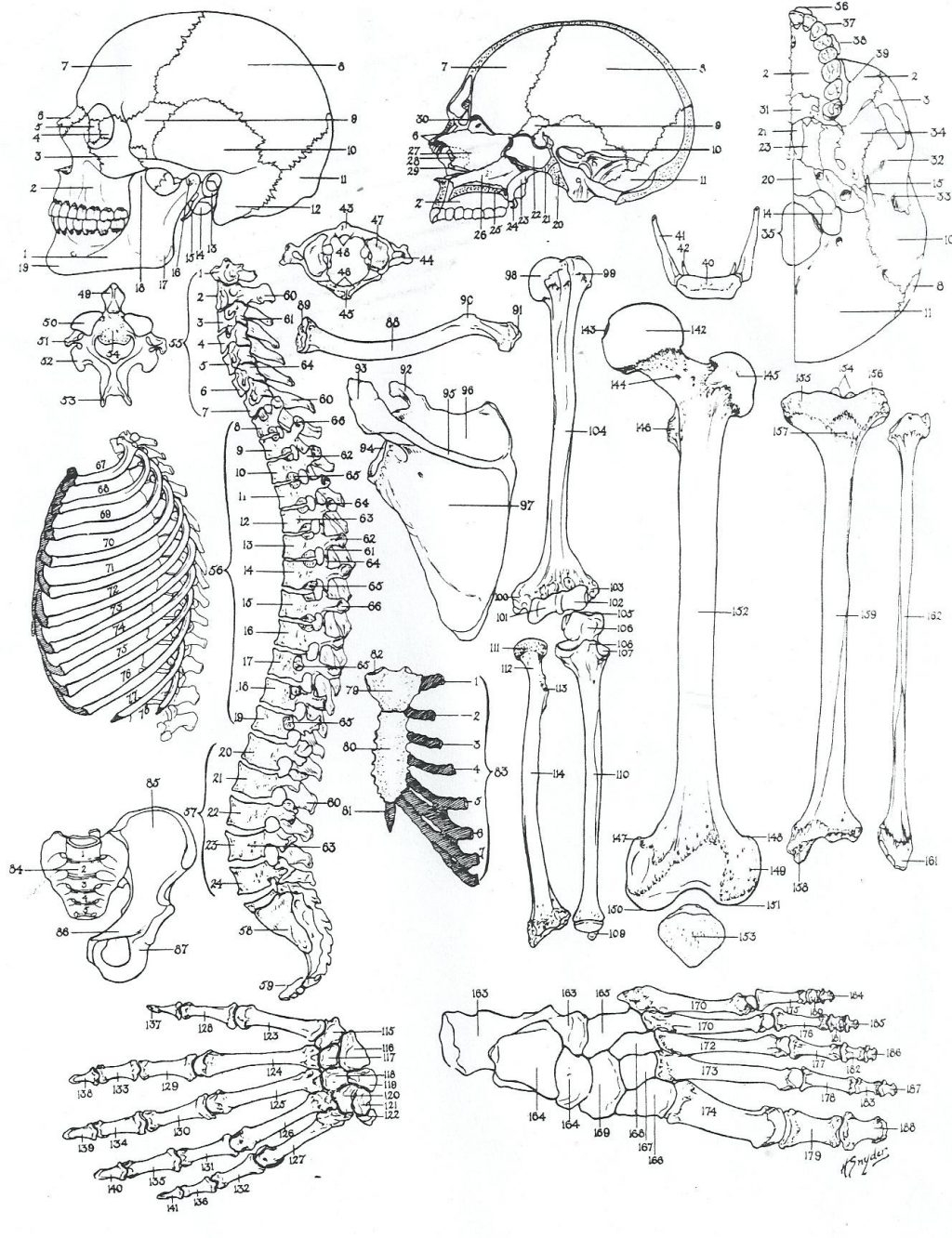 Free Printable Human Anatomy Coloring Pages