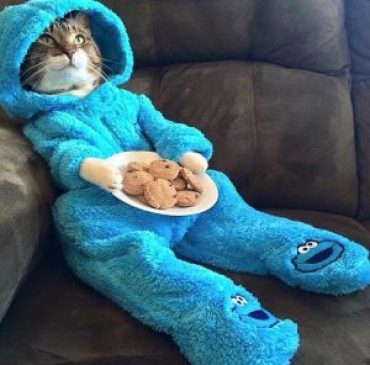 cat cookie