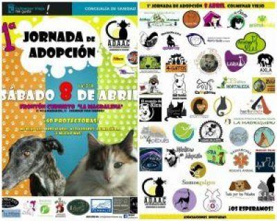 jornada-adopcion-colmenar-viejo 4gatosmadrid.org