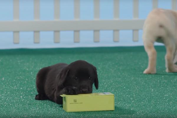 puppies-lg-g5