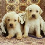 Animals Beautiful Dogs Desktop