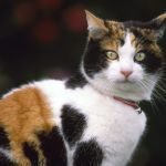 Pet Cat hd Wallpaper