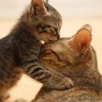 Very cute cat hd wallpapers