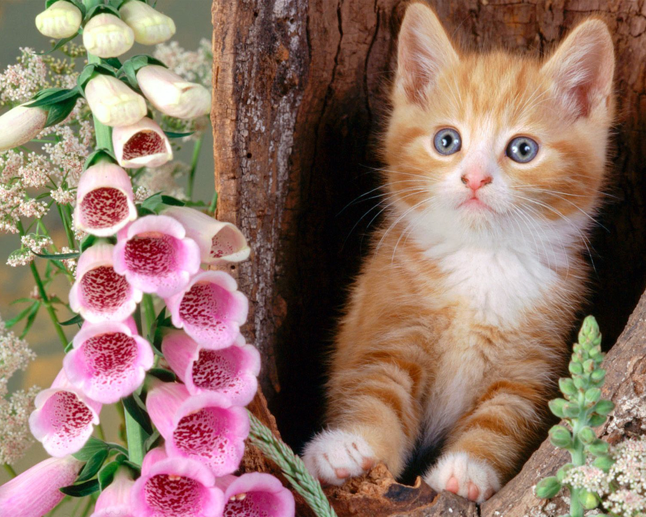 Beautiful Cats In Different Styles Free Download Hd Wallpapers