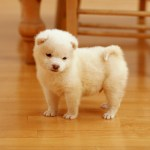cutest puppy wide hd wallpapers