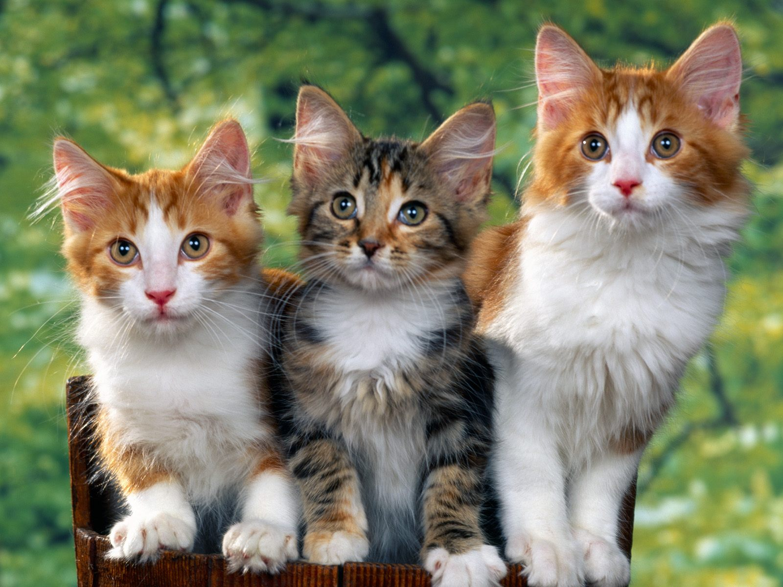 BEAUTIFUL CATS WALLPAPERS