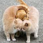 three funny cat animal