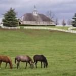 top desktop horse wallpapers