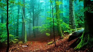 Natural HD Forest Wallpapers