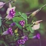 free hd flower wallpapers