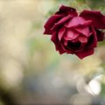 unique flowers pictures