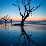 free download trees picture in water wallpaper