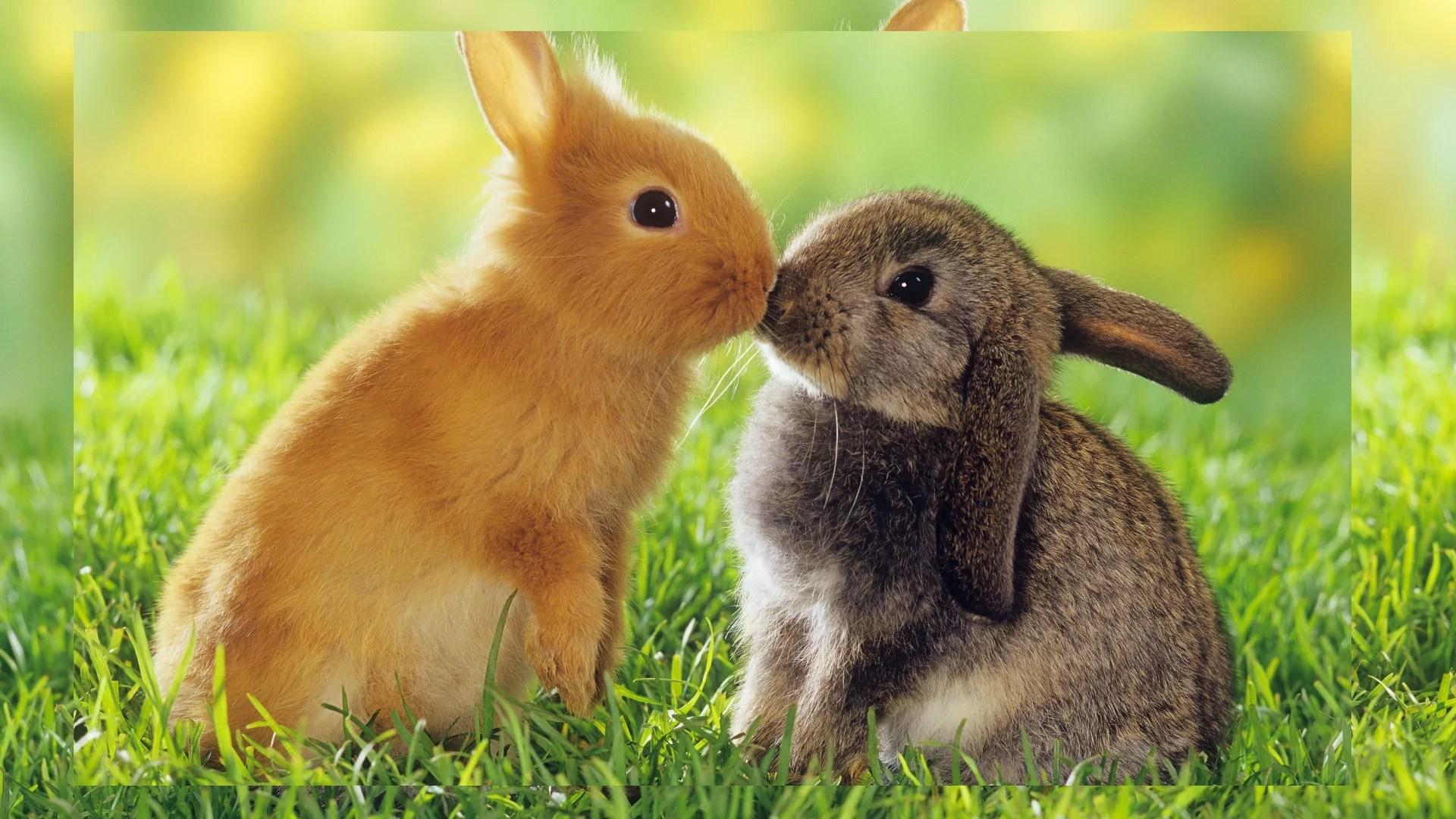 Image of: Cute Baby Love Unique Animal Wallpapers Free Download Hd Wallpapers Free Best Hd Unique Animal Wallpapers Free Download Hd Wallpapers