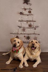 2014 Christmas Stout Annabelle