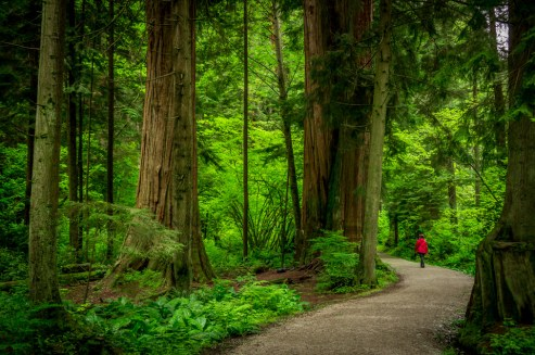 Vancouver Stanley Park 4