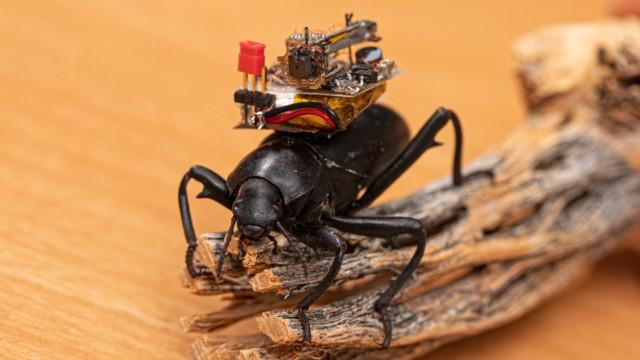 Камера для насекомых