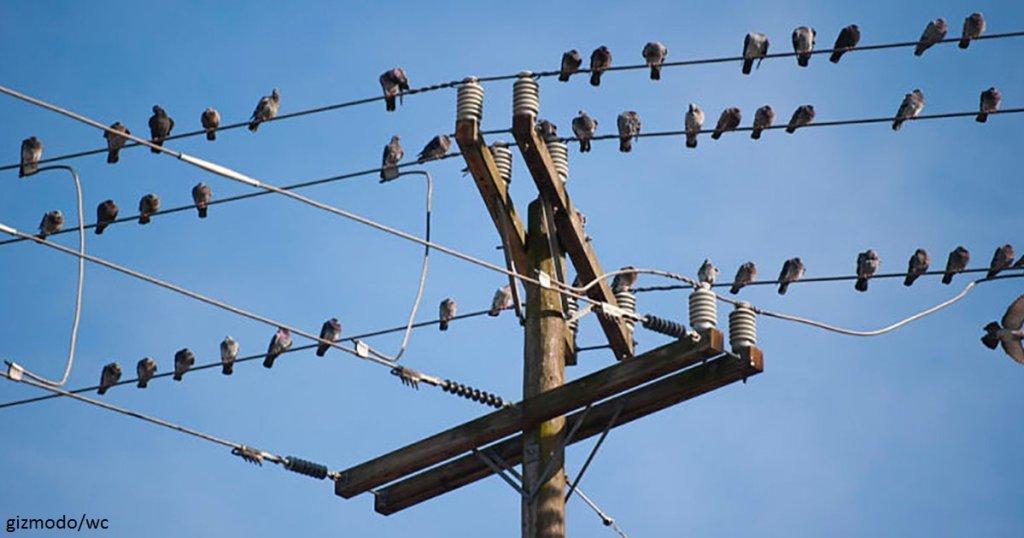 почему птиц не бьет током