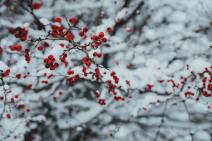 happy-christmas-2020-4k-free-wallpapers-05
