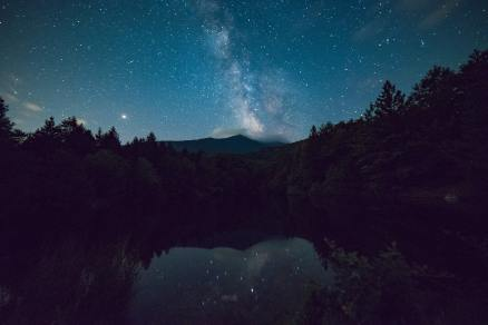 scenic-view-of-forest-during-night-time
