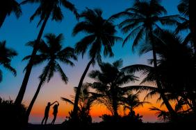 beside-trees-during-sunset