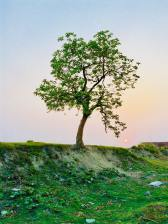 photography-of-tree