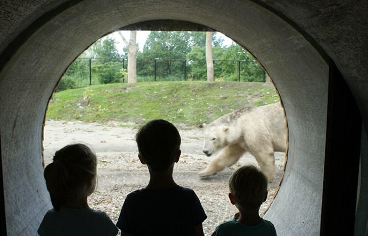Met kinderen naar Aqua Zoo, waar de dieren wel heel dichtbij komen