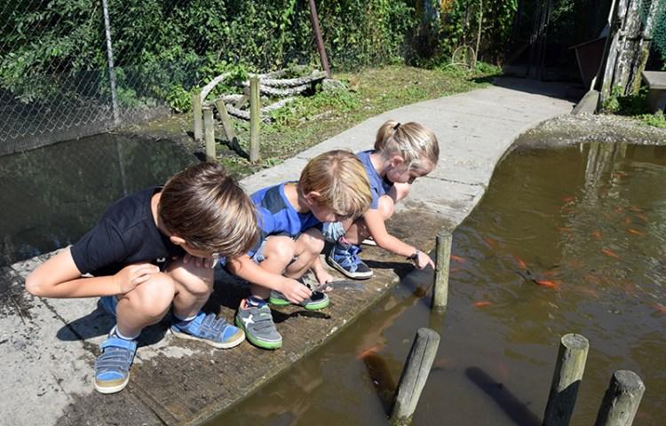 Met kinderen naar Insektenwereld DoeZoo