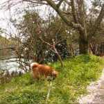 犬との散歩もHDビデオで撮れば芸術に!