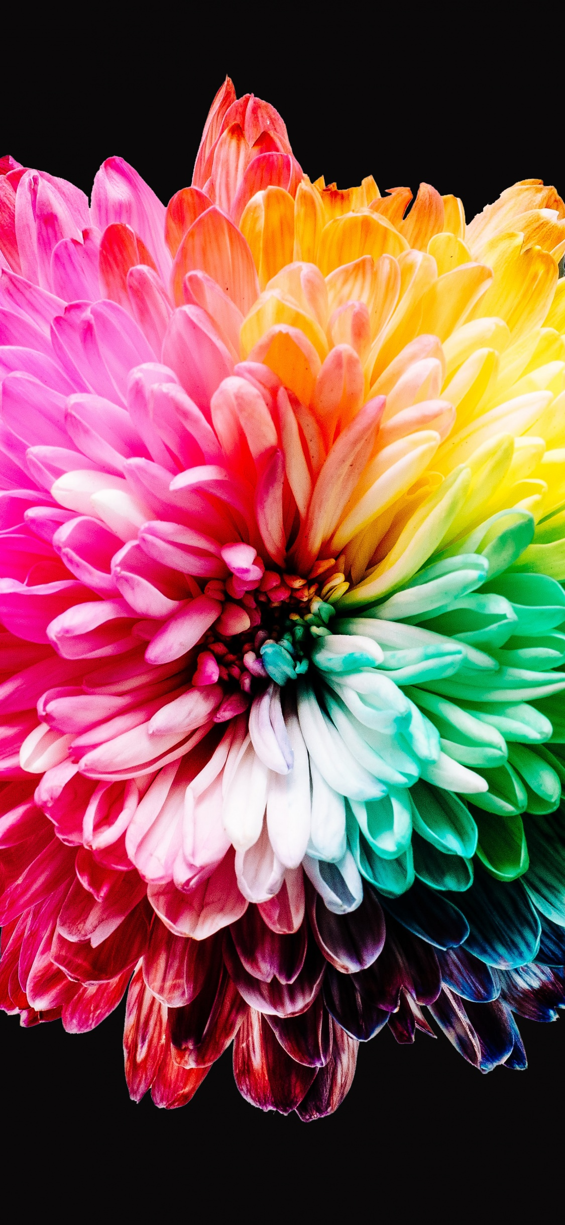 This is the 4k desktop background resolution for ultra high definition displays. Colorful flowers Wallpaper 4K, Multicolor, Black background, 5K, Flowers, #1258