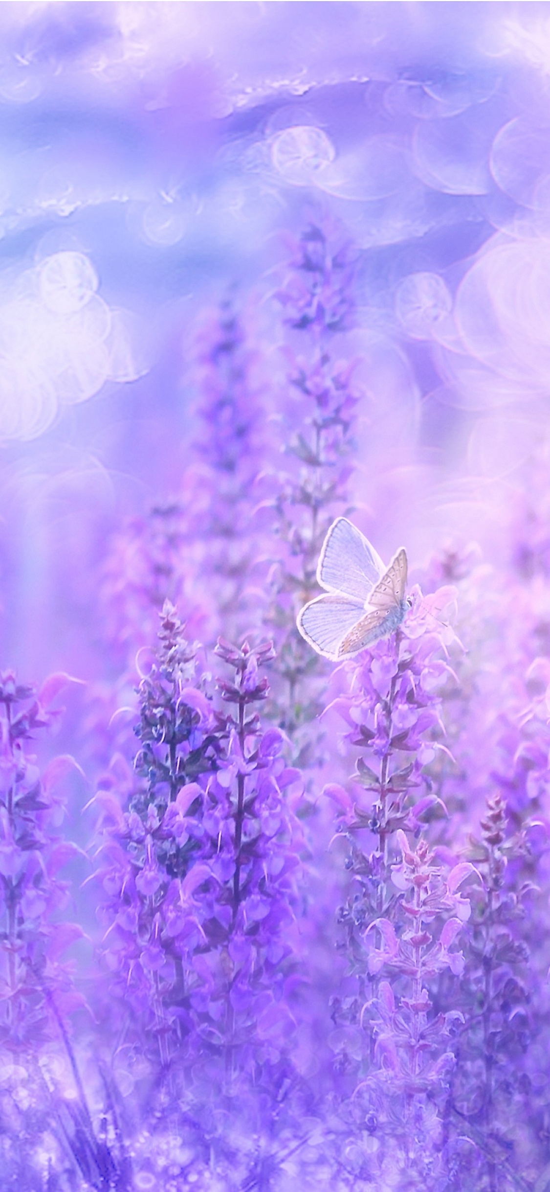Find and download the best iphone wallpapers. Sage Plant Wallpaper 4K, Violet flowers, Butterfly, Garden