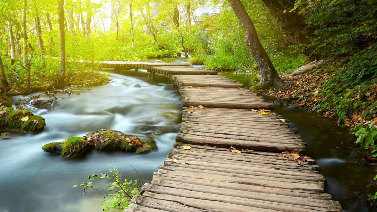 Hd wallpapers and background images Wooden Pier 4K Wallpaper, Forest, Green Tress, Water
