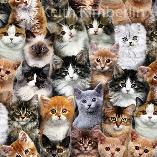 Cute Siamese Kittens Wallpaper Cotton Fabric Animal Fabric Adorable Pets Kitten