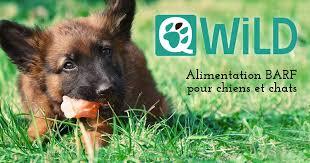 Qwild-dressage-pension-canine-chien-rennes-35